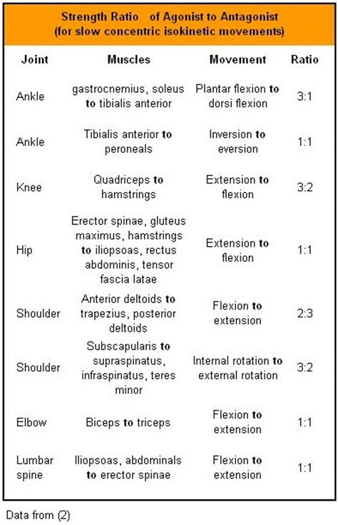 antagonist muscle pairs list picture 6