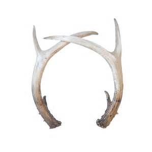 is deer antler plus legit picture 3