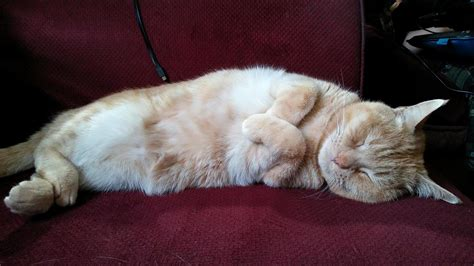 cat pain relief picture 11