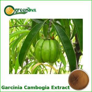 garcinia cambogia extract for sale picture 7
