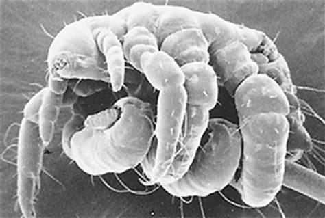 can talazole treat vigina bacteria picture 5