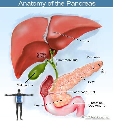 aging and pancrease picture 17