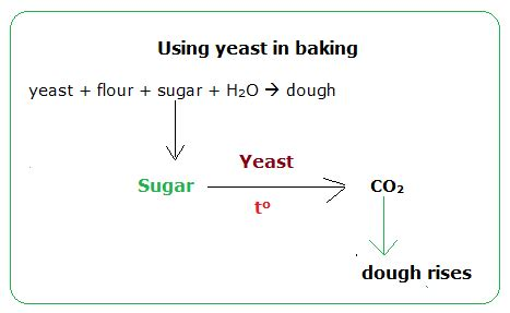 chemical formula for yeast picture 15