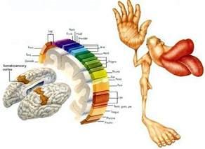 male brain breast area cartoon picture 10