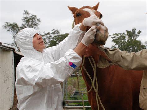 equine herpes lysine picture 3