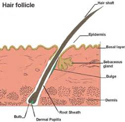 hair follicle test herbal extreme picture 6
