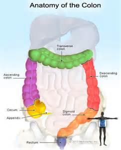 the colon picture 3