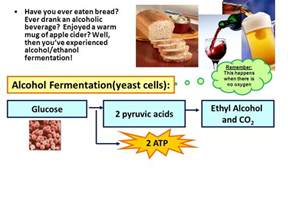 yeast as a muscle builder picture 15