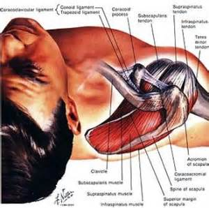 gamot sa pain ng shoulder muscles picture 3