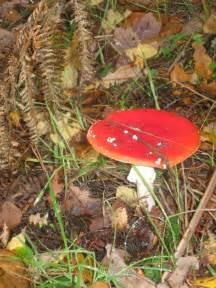 identifying fungi mushrooms wild picture 15