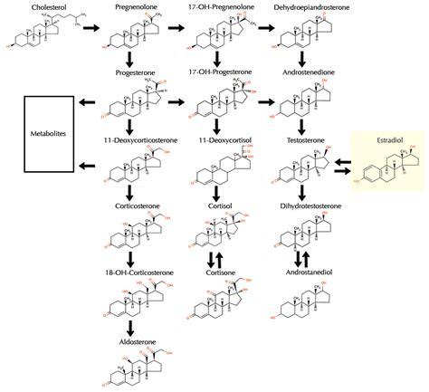 testosterone estradiol and progesterone picture 1