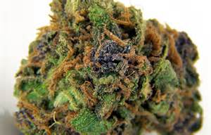 bud or buds or marijuana or pot super picture 2