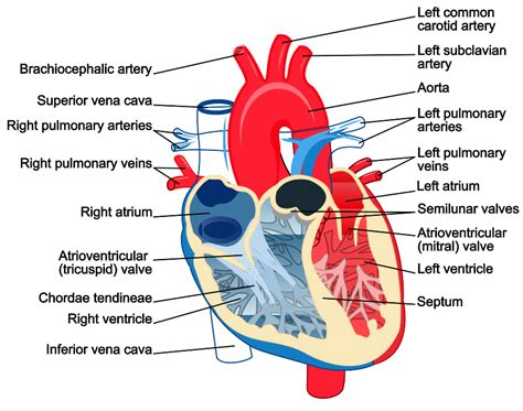 can i buy circu aid for blood circulation picture 11
