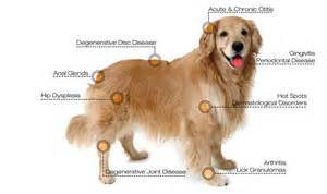 canine pain relief therapy picture 6