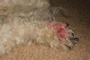 dog skin health picture 9