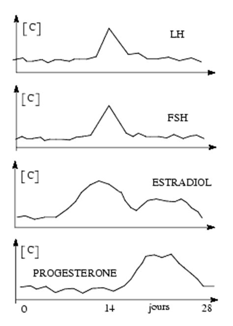 testosterone in menstrual cycle picture 13