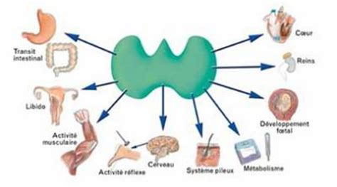 super high thyroid hormone picture 2