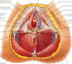 deep female bladder filling picture 7