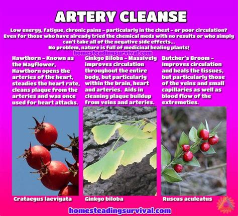 artery cleansing herbs picture 8