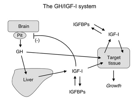 hgh and insulin picture 5