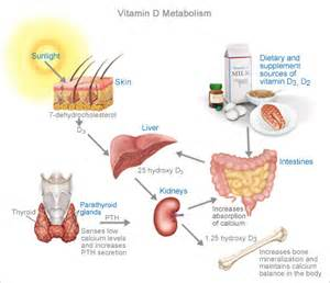 vitamin d and the gallblader picture 1