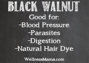 black walnut herbal remedy picture 9