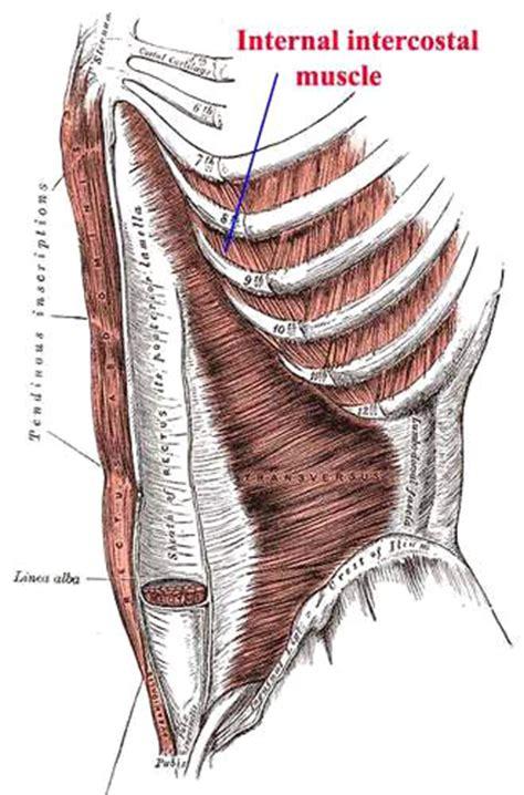 intercostsal muscle strain picture 6