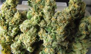 health benefits of dollar weed in florida picture 10