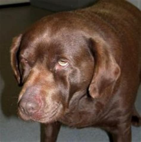 fear in dogs thyroid picture 6