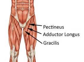 groin muscle picture 3