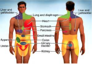 pain referral pattern for liver picture 1