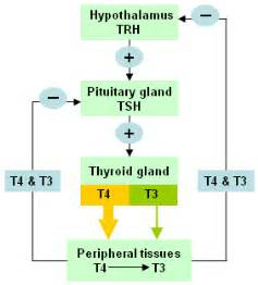 false negative thyroid function test picture 9