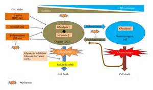 revatio mechanism of action picture 2