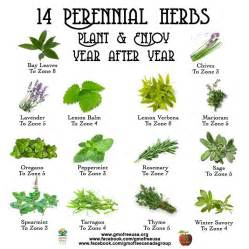 which herbal plant is best for an picture 3