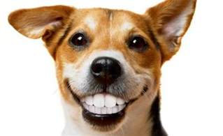 pets teeth picture 2