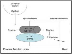 b12, b6 w/ adenosine (myoden) picture 9