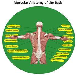 back muscle and tendon pain picture 9