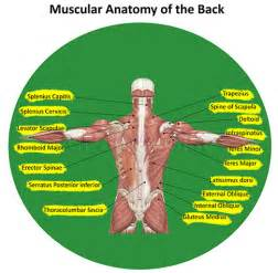 muscle spasm back tighten nervous picture 14
