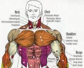build chest muscle picture 1