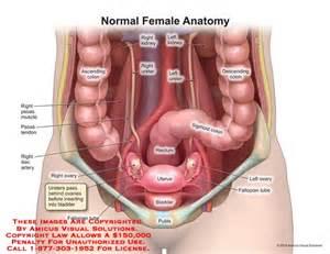 anatomy female bladder picture 5