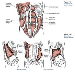 muscle pain in stomach when el movement picture 1