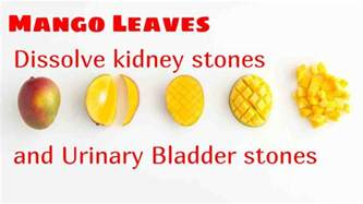 removing a kidney stone in the bladder picture 8
