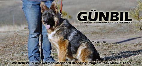 gunbil german shepherds complaints picture 1