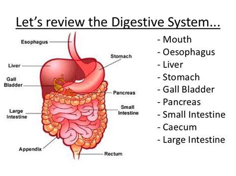 digestion in herbivores picture 16