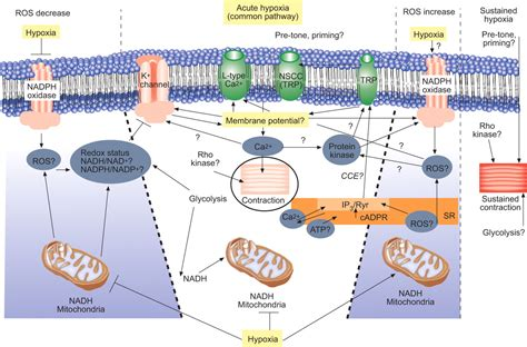 chronic muscle contraction picture 2