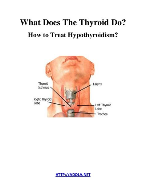where do i get desiccated thyroid picture 1