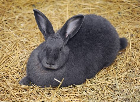 bunnies diet picture 7