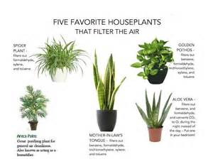 does sleeping with plants cut off your oxygen picture 11