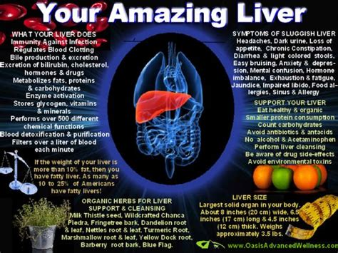 fatty liver get rid of cellulite picture 6