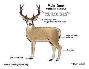spraying deer antler directly on penis picture 18
